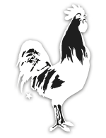animal_rooster